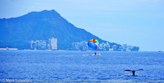 Explore Hawaii: Having a Whale of a Good Time (Honolulu, Oahu)