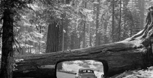 sequoia-national-park-granger