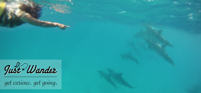 Explore Hawaii: Snorkeling with Wild Spinner Dolphins (Waianae, Oahu)