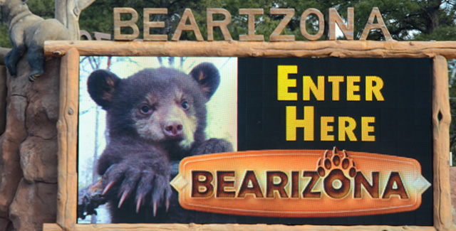 Bearizona: Drive-Thru Wildlife Park (Williams, AZ)