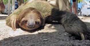 jw-Honduras-Sloth10