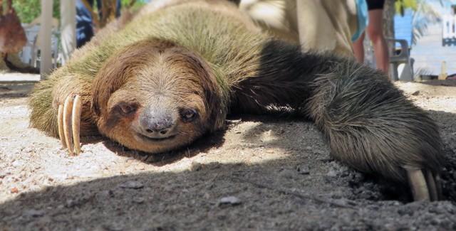 Where in the World Can You Hold a Sloth? (Mahogany Bay, Roatan, Honduras)