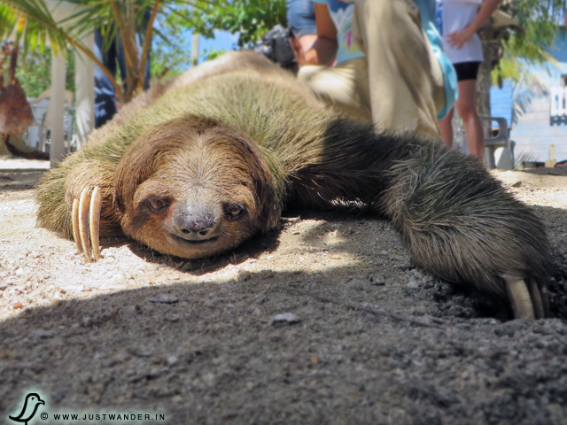 Where In The World Can You Hold A Sloth Mahogany Bay