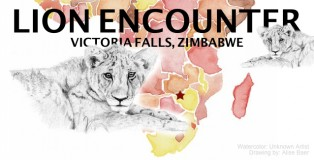 Featured Image: Lion Encounter