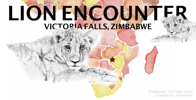 PIC: Featured Image for Lion Encounter