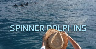 featured-img-SpinnerDolphins