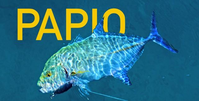 Boating: Fresh Catch – Papio (Bluefin Trevally)