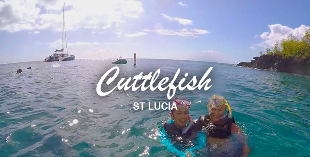 First Time: Spotted a Cuttlefish while Snorkeling in St Lucia