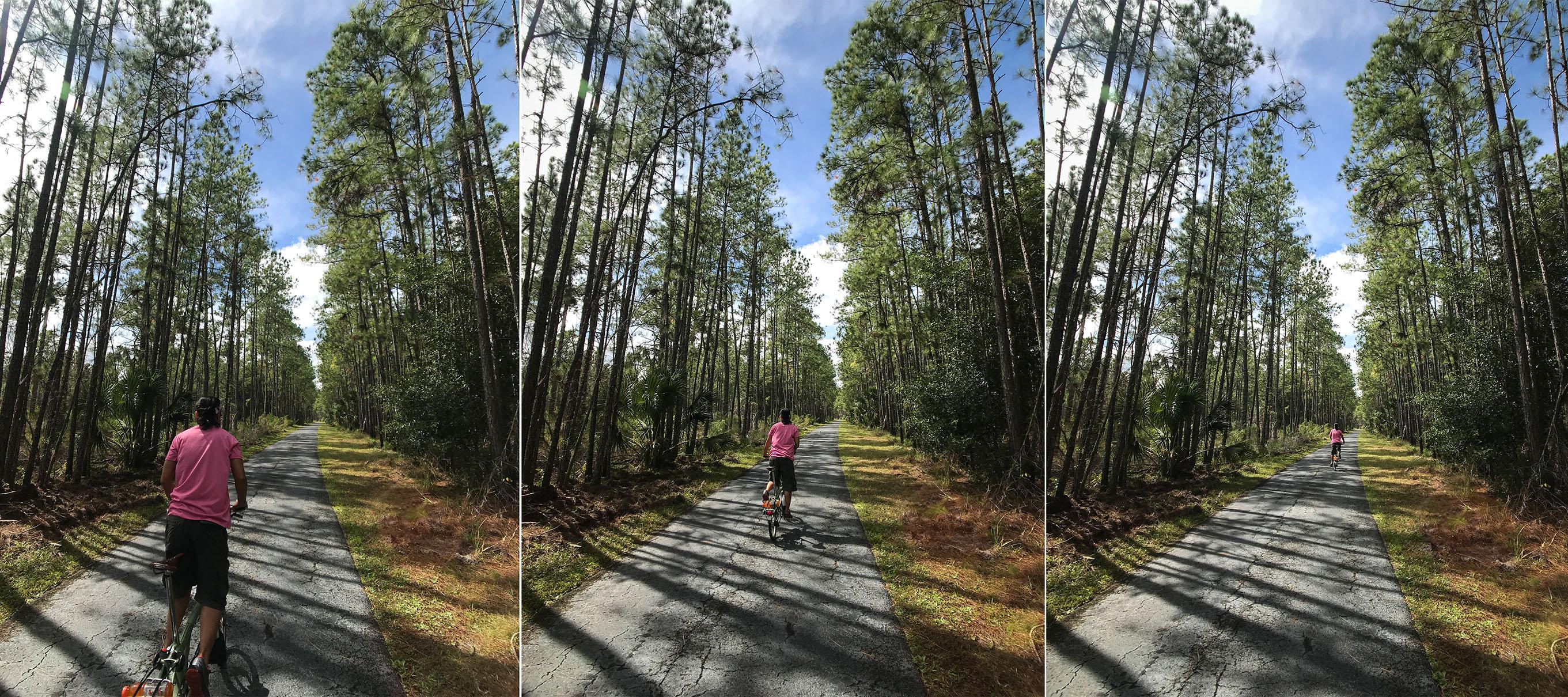Flatwoods Wilderness Trail - Woody Biking