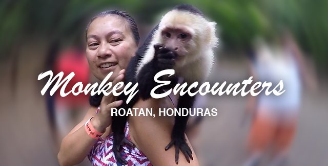 2 Different Capuchin Monkey Encounters in Roatan, Honduras