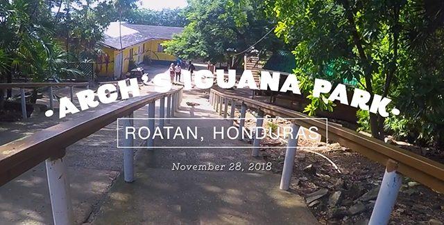 A Caribbean Experience: Feeding Wild Iguanas (Roatan, Honduras)