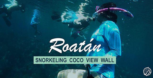 Things to Do: Snorkeling around CoCo View Wall (Roatan, Honduras)
