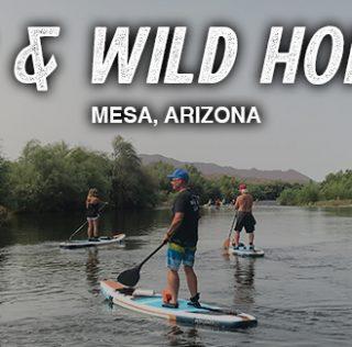 SUP and Wild Horses on the Salt River (Mesa, AZ)
