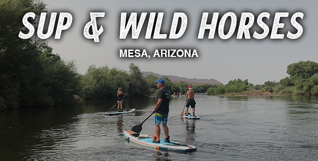 SUP and Wild Horses on the Salt River (Mesa, AZ)